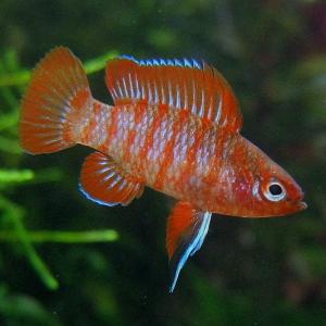 Kitos žuvys