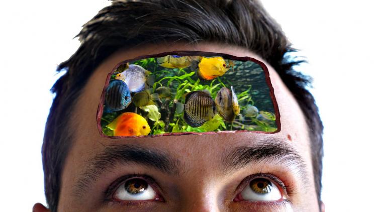 Kaip išsirinkti žuvis