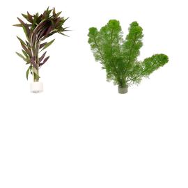Augalų kekės
